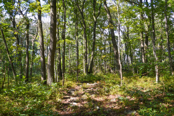 Welsh Mountain Addition | 23 acres