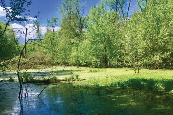 Wetlands Protected and a Forest Garden Opened