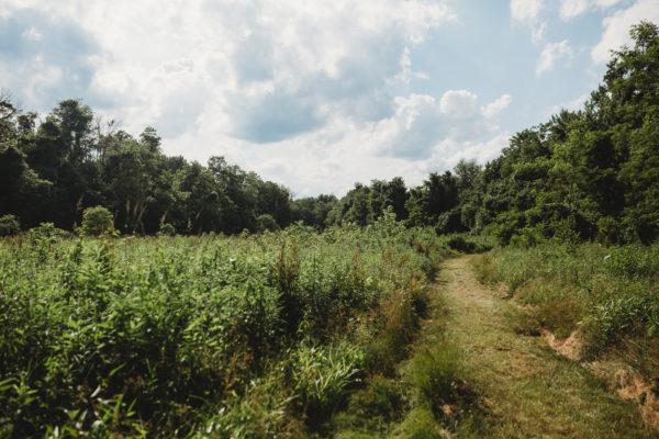 Bird Club to Help Complete Forest Garden