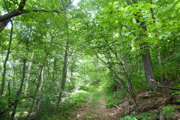 Lancaster Conservancy Protects 70 Additional Acres in Hellam Hills Nature Preserve