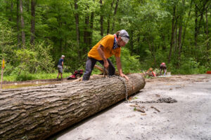 Man in orange t-shirt wraps chain around log laying in a forest road.