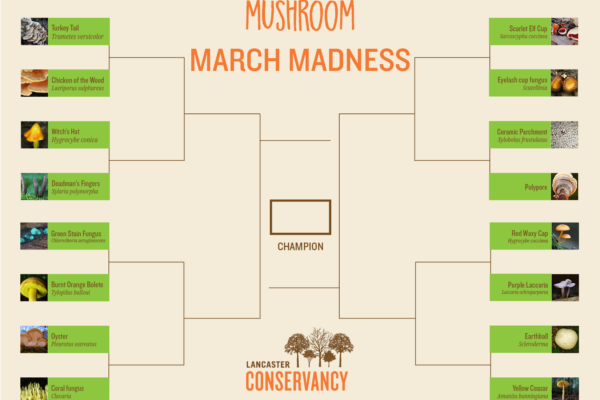Mushroom March Madness