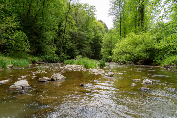 Spring Restoration Work at Fishing Creek Nature Preserve