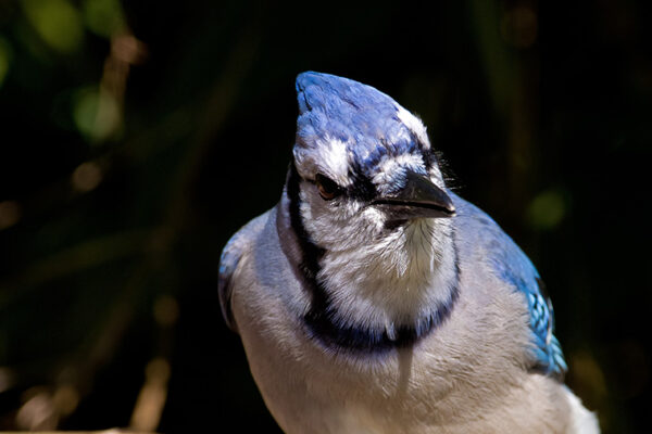 Conservancy Responds to Mysterious Illness in Songbirds