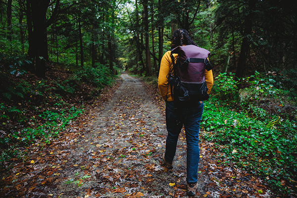 Your Woods in Autumn: Top Ten Things to See on Fall Hikes