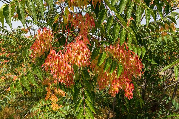 """A Battle """"Won"""" – Ailanthus Trees Eradicated from Climbers Run"""